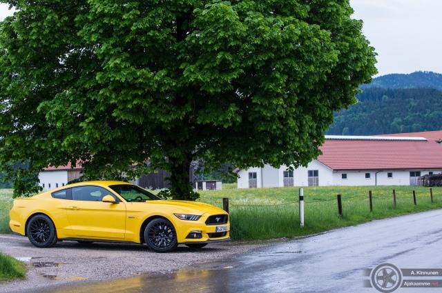 Mustang ja puu